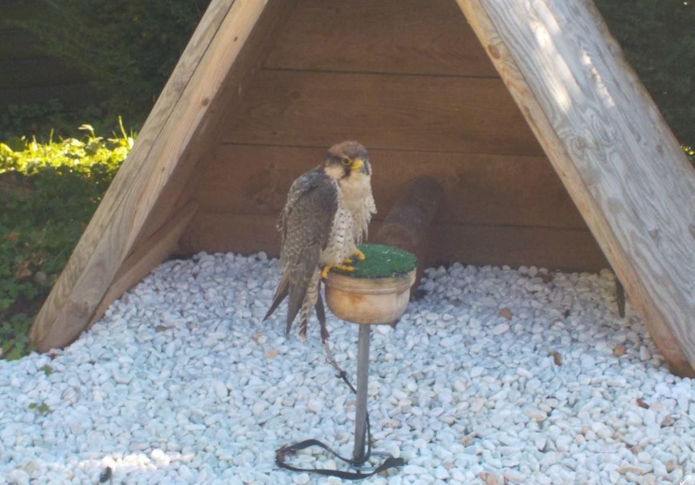 Vogelpark3 2